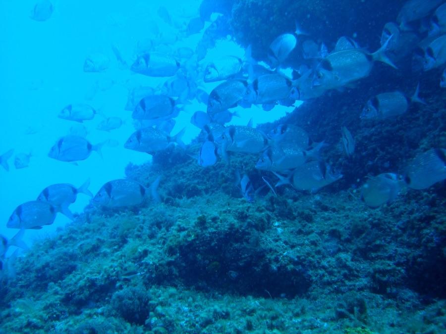 Plongée à Taormina, ville de charme et sport.